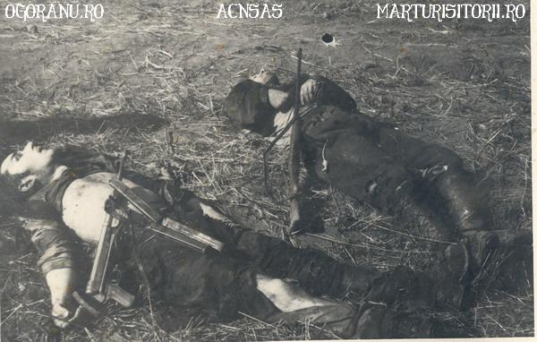 20 Cistei Victime din cadrul Grupului de rezistenta armata Ion Gavrila Ogoranu - CNSAS - Marturisitorii