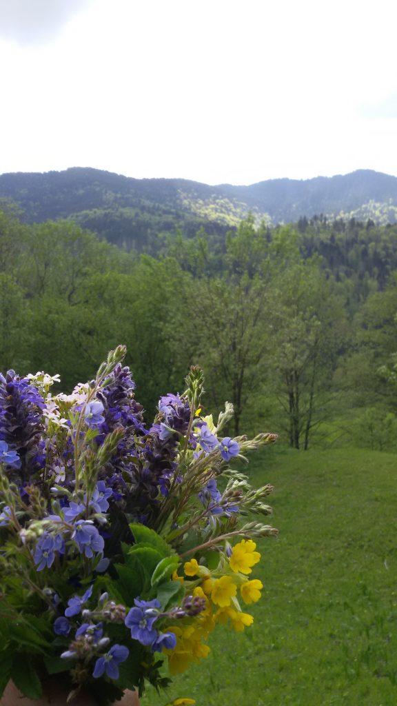 flori-la-petru-voda